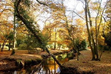 NewForest Autumn